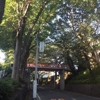 あの有名な桜坂の近くです※写真は前回募集時のものです