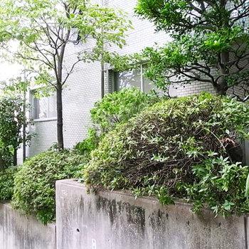 気持のよい緑と外壁