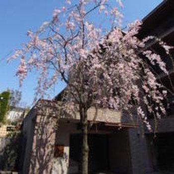 春には桜が綺麗です