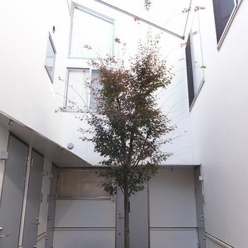 玄関前の共用部。中庭のような造りになっています。