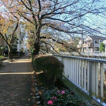 川沿い、公園と自然が豊かな環境
