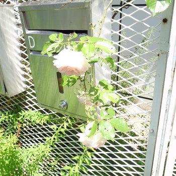 薔薇の咲くポスト