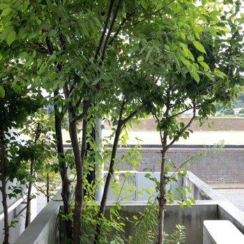 テラスには青々しい木が。