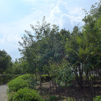 近くには緑がいっぱい。お散歩が楽しそう!