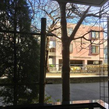 眺望は木ですが、右側に少し隙間があって通りが見えます。