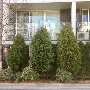 冬でも1階はこんなにもっこりと木に覆われています。