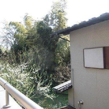 お隣は一軒家で反対の窓からは植物がたくさん見えます。