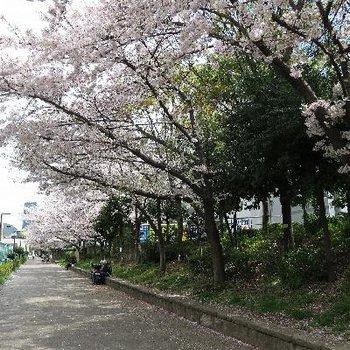 すぐ近くに靭公園の桜並木