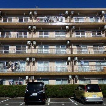 昭和54年築のレトロなマンション。