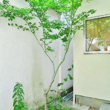 新緑の植栽が嬉しい〜!