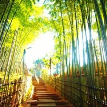 京都を思わせる、美しい竹林※写真は前回募集時のものです。