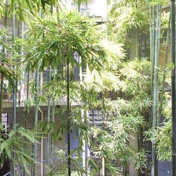 中庭の竹林!