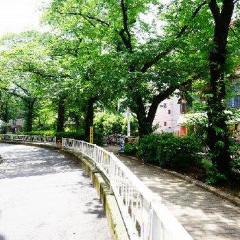道中はこんな道を。気持ちよい散歩道に♪