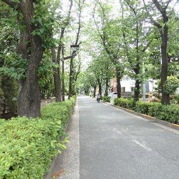 旗の台駅までの道にはこんな緑道が!すてき!