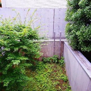 眺望は地下の庭が望めます!