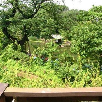眺望は完璧!公園です!池!※写真は前回募集時のものです