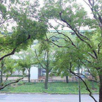 眺望は木。秋は黄色に染まる、イチョウの並木です!
