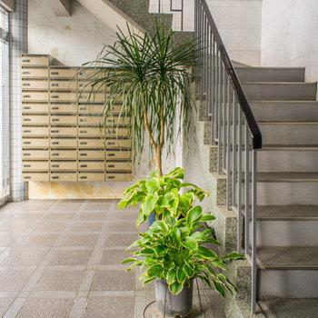 玄関ホールでは観葉植物がお出迎え