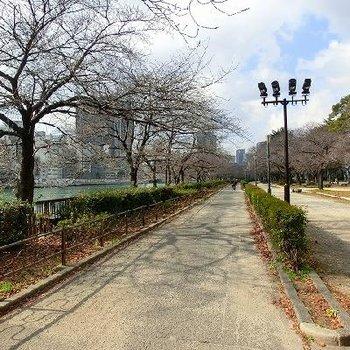 天満橋沿いの公園、春は桜が咲き誇ります