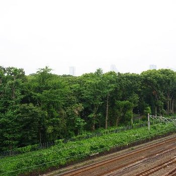 そしてこの眺望!明治神宮の森が広がります!