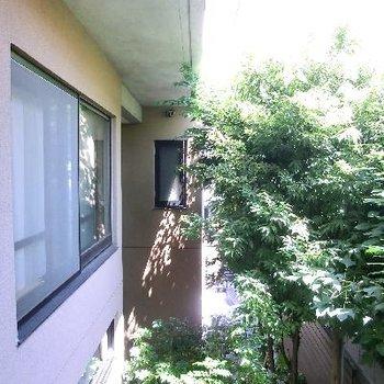 メインの窓からの眺望。お隣さんの窓が視界にはいります。