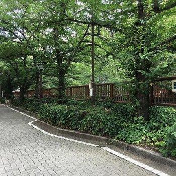 目黒川の桜並木がすぐ!
