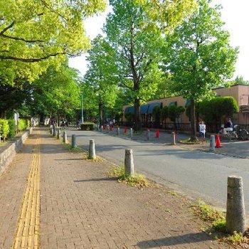中村公園がすぐ目の前。この環境は良いなぁ