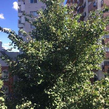 街路樹がどーんと見えます。向かいのマンションからの目線が気にならない!