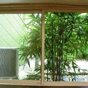 窓からの眺望。この竹林がやさしい♪