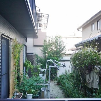隣の庭が見えます。