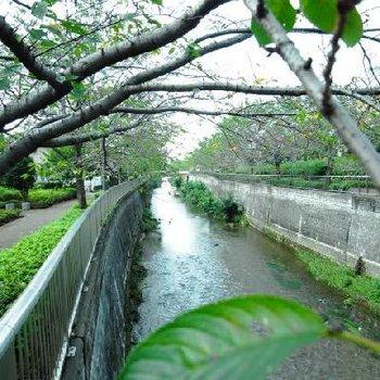 お家の前を流れる川です。ゆったり。