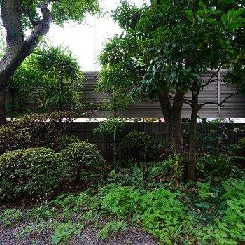 眺望は敷地内の緑♪ ※写真は前回募集時のものです。