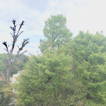 眺望は目の前の公園!の木!