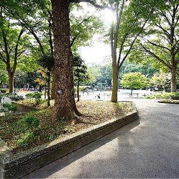 目の前は新宿中央公園なんです!
