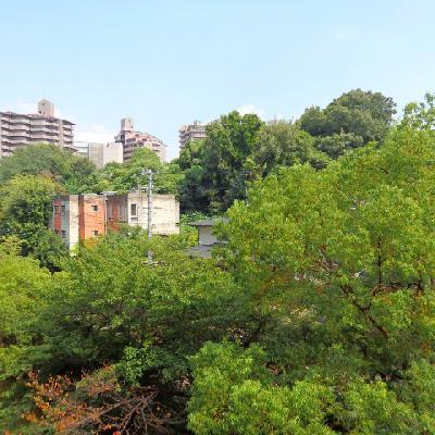 緑あふれる眺望!これ全部桜の木なんです!春には家にいながらお花見ができちゃいます