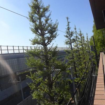 窓からは首都高と街路樹が見えます