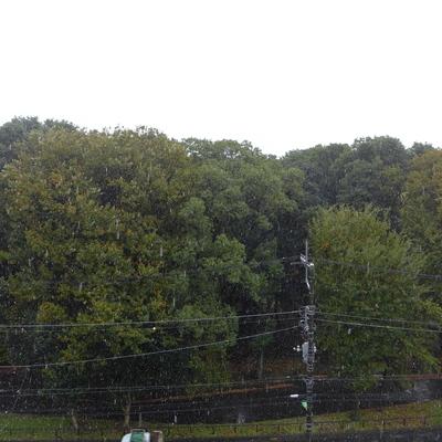南の眺望は、がっつり森!癒やされますね