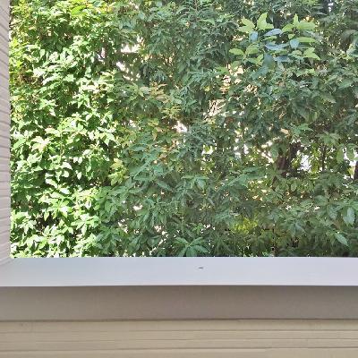 眺望はお隣さんとの仕切りのグリーン。