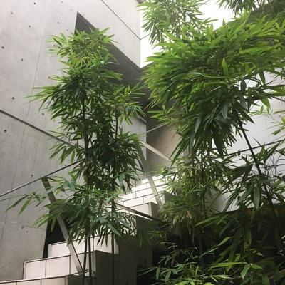 この階段を登ればお部屋です