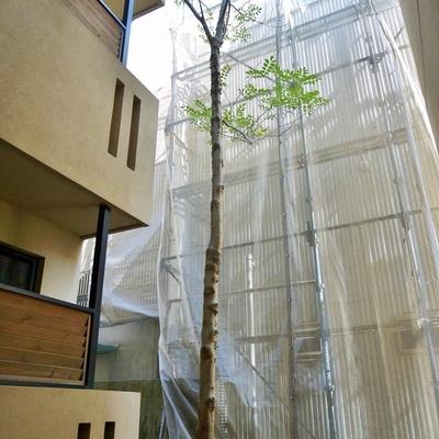 外には緑の木が植えられてます。