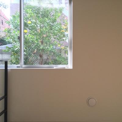 窓から緑を望めます