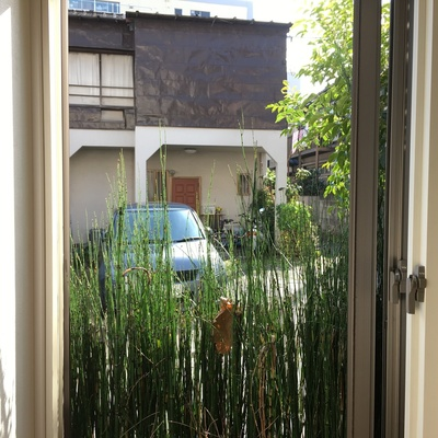 窓をあけると草がふぁさっと