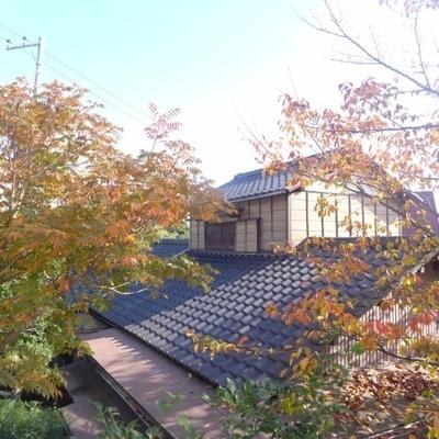 眺望は、木とお家。人目はあまり気になりません