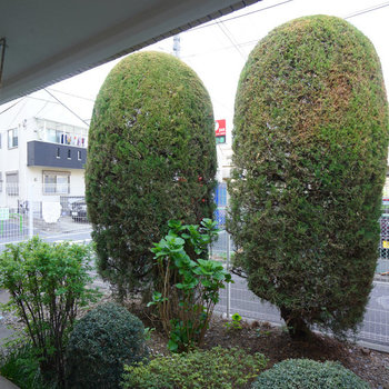 眺望はこちら。敷地内の緑がgood