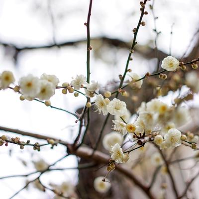 庭には梅が咲いてます※写真は前回募集時のものです