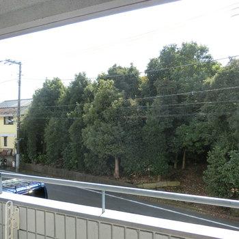 バルコニーからの眺望。木々が見えました!! 小鳥が鳴いてました!!