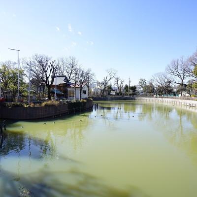 大きな池のある碑文谷公園がすぐ近くにありました。