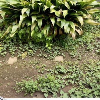 【テラス】植栽が施されています。