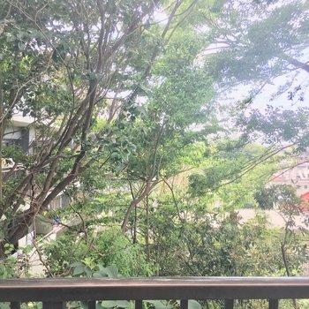 眺望はワサワサミドリ