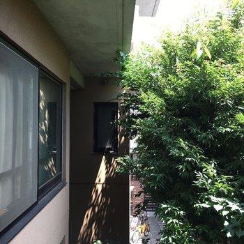 お部屋の窓からの眺望は中庭の緑◎※写真は前回募集時のものです
